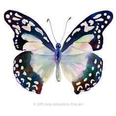 No.90 Angola White Lady Butterfly, 8x10 Signed Fine Art Print of Amy Kirkpatrick watercolor on Etsy, $25.00