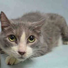 SEEKER - A1069346 TO BE DESTROYED 4-9-2016...RESCUE...ADOPT...SAVE!!