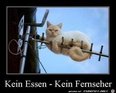 lustiges Bild 'Jetzt weißt du Bescheid.jpg'- Eine von 22869 Dateien in der Kategorie 'witzige Bilder' auf FUNPOT.