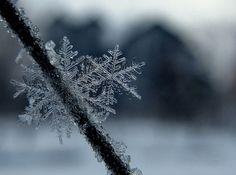 Pretty snow flake