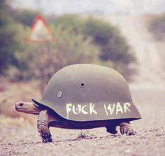 Peace loving turtle.
