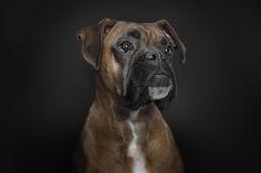 Ralph Hargarten é o fotógrafo de Hamburgo que está por trás desta nova e intrigante série fotográfica chamada vida de um cão.