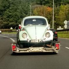 There's a bug on my windscreen! Beetle Bug, Bugs, Volkswagen, Antique Cars, Workshop, Instagram Posts, Vintage Cars, Atelier, Beetles