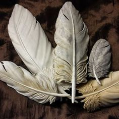 jim hughes carved feathers - Google Search Wood Carving Designs, Wood Carving Art, Bone Carving, Wood Art, Wood Carvings, Feather Crafts, Feather Art, Diy Wood Projects, Wood Crafts