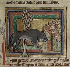 This wolf has just had ENOUGH of today and wants it to be over.