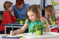Step by step overview of Zigazoo app Measurement Activities, Math Measurement, Classroom Pets, Rain Gauge, Lesson Plan Templates, Basic Math, Math Concepts, Preschool Math, Dramatic Play