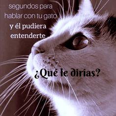 Gracias por ser mi amigo/a y compartir tu majestuosa vida conmigo...!! #gatos Instagram, Girlfriends, Thanks, Gatos, Life
