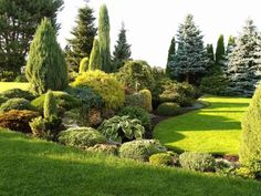 evergreen garden - Google Search                                                                                                                                                                                 More