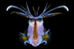 The winners of the 2010 Nature's Best Photography Ocean Views Contest are a stunning sample of marine wildlife and ocean vistas from around the...