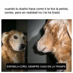 These Animals Humor memes are super collection of fun and love.Read This 23 Animals Humor memes 23 Animals Humor memes 23 A… Funny Animal Memes, Cute Funny Animals, Funny Animal Pictures, Funny Cute, Funny Dogs, Funny Memes, Animal Humor, Dog Pictures, Dumb Dogs