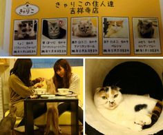 Calico Cat Café The first menu you'll see at Calico Cat Café in Tokyo has nothing to do with food: it's the cat selection. But you won't be dining on any of these adorable felines – they're just there to provide some companionship while you sip a cup of tea.
