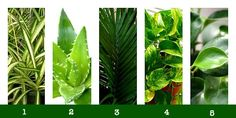 Five Wonder Plants That Make Your Home Healthier - MightyNest for Schools
