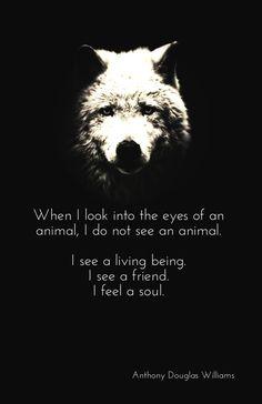 anthony douglas williams animal quotes - Google Search