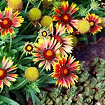 Top 50 water-wise plants These plants grow effortlessly in low-water conditions and bloom in an array of colors