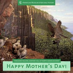 Still looking for a gift for mom? Print these Mother's Day cards, featuring anamazing mom menagerie from around the Museum! We're sure yours will love them! Learn about six amazing animal moms and print the cards here.