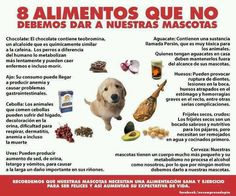 Alimentos dañinos para mascotas.
