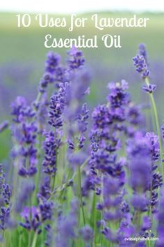 Lavender Essential Oil is so calming, soothing and versatile. It is truly one of my favorite oils. Here are my top 10 favorite ways to use lavender oil in my everyday life. I hope you will join me in reaping the many benefits of wonderful lavender!