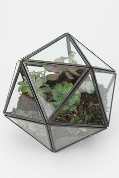 Turning Triangles Terrarium from Urban Outfitters. Saved to misc. Shop more products from Urban Outfitters on Wanelo. Glass Terrarium, Succulent Terrarium, Terrariums, Succulents Garden, Hanging Terrarium, Plastic Terrarium, Terrarium Centerpiece, Terrarium Containers, Mini Terrarium