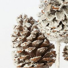 Guide to drying pinecones for holiday home decor.
