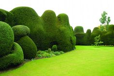 """Yew hedge -- Jake Hobson, """"The Art of Creative Pruning,"""" Timber Press"""