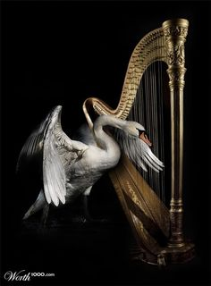 Celtic Atmosphere - The Enchanted Harp 01 - Castle Kelly 02 - She Moved Through The Fair 03 - The Fairy Queen 04 - Arran Boat Song 05 - The Twisting Of The R. Fantasy, Philip Glass, Amy Brown, Swan Song, Swan Lake, Harbin, Art Music, Faeries, Fairy Tales