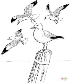 Seagulls coloring page from Seagulls category. Select from 27237 printable crafts of cartoons, nature, animals, Bible and many more.