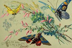 1870's-80's Insects Moths Butterfly Merry Christmas Embossed Victorian Card F96
