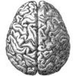 Study identifies brain circuits involved in learning and decision making