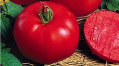 Tomaten: Tipps für eine reiche Ernte - Mein schöner Garten
