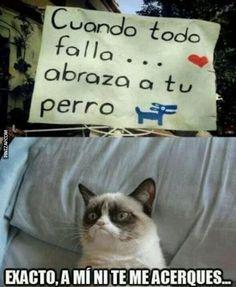 New memes chistosos humor grumpy cat ideas Memes Humor, New Memes, Funny Cat Memes, Funny Cats, Funny Animals, Hilarious, Super Cat, Spanish Humor, Frases Tumblr