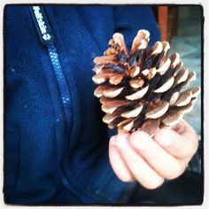 Frau W.: Experimente für Kinder: Tannenzapfen Kids And Parenting, Diy Crafts, Girls, Forest Nursery, Pine Cones, Games For Children, Woman, Make Your Own, Homemade