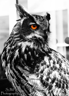 Black and White Owl with Amazing Eyes by Steven Munden on 500px