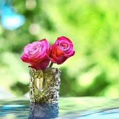 Rose love by Healzo.deviantart.com on @deviantART