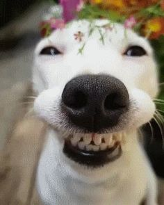 "catgifcentral: ""Smiling Dog"" Whatta grin"