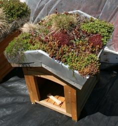 Dog friendly plants on roof for insulation. Great idea.