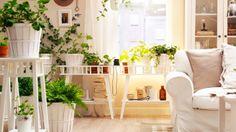 Déco végétale : créer un jardin d'intérieur // http://www.deco.fr/diaporama/photo-un-jardin-meme-en-appartement-54588/pot-plantes-interieur-765922/