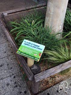 Bonne initiative à #Perpignan qui végétalise ses pieds d'arbres. #ecologie  Marie Rosique / MR / Blog artistique: Pieds d'arbres végétalisés