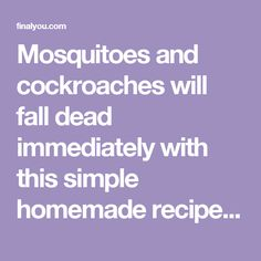 Mosquitoes and cockroaches will fall dead immediately with this simple homemade recipe !!! - Final You
