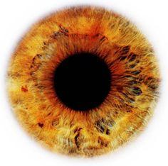 eye-scapes-09.jpg 403×400 pixel