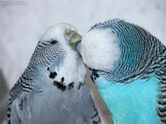 love and kisses and beautiful blue
