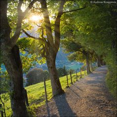 """Picture of the Day: """"Sunshine Through the Sycamores"""""""