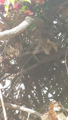 Bee removal in Johannesburg, removed bees on a tree branch in medlar road, sandton