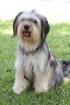 Paul Anka the dog (Gilmore Girls) is so adorable! I love how quirky yet smart he is.