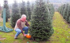 Bozeman #Christmas #Tree Farm To http://houston.kidsoutandabout.com/