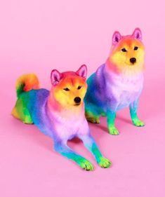 the animals and the bright colors diy funny tattoo bonitos cachorros graciosos Tier Wallpaper, Animal Wallpaper, Cute Little Animals, Cute Funny Animals, Rainbow Dog, Rainbow Pride, Colorful Animals, Cute Dogs And Puppies, Cute Dogs Breeds