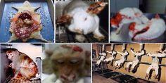 Nachstehend ist eine detaillierte Liste mit einigen der zahlreichen Unternehmen, die immer noch Produkte in Tierversuchen testen. Viele dieser Unternehmen besitzen beliebte und weithin anerkannte Marken.