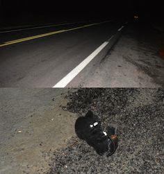NONATO NOTÍCIAS: Casal fica ferido após colidir moto em vaca na BR ...
