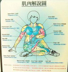 拉筋術是一些簡單可行,而且立竿見影的中醫自然療法,以下提到的拉筋術就是中醫精髓,最實用的內容了。拉...