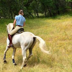 Riding Gear, Horses, Animals, Animais, Animales, Animaux, Animal, Horse, Dieren