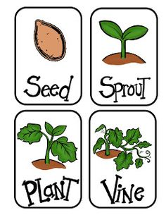 Pre K Insects And Life Cycles on Lima Bean Clipart Worksheet Kindergarten